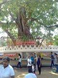 Wonderful temple in Sri Lanka. This is bo tree in Bellanwila Rajamaha Viharaya. It`s very powerful Stock Photography