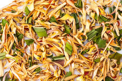 Wonderful Thai herbal tea with Pandan and Lemongrass. Studio Photo Royalty Free Stock Photo