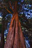 A wonderful tree in quiet place royalty free stock image