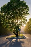 Wonderful tree with sunset Royalty Free Stock Photography