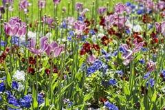 Wonderful tulip blossom Royalty Free Stock Photos