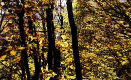 Wonderful undergrowth, in autumn, high contrast Royalty Free Stock Photography