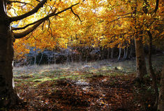 Wonderful undergrowth, in autumn, high contrast Stock Photography