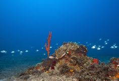 A wonderful underwater and floating fish flocks in the Maldives. Everyone should see this scene once in your life, water life, the colorful life there is not Royalty Free Stock Photo