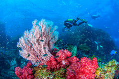 Wonderful underwater and vibrant colors of corals and Scuba Diver backdrop. royalty free stock photos
