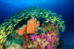 Wonderful underwater world. Wonderful underwater world with beautifully schooling fish and vibrant colors of corals Stock Photos