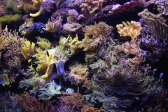 Wonderful underwater world with corals and fish in singapore