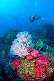Wonderful underwater world. Royalty Free Stock Photos