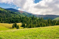 Wonderful valley with spruce forest. Beautiful landscape in mountains. sunny and warm september weather royalty free stock photos