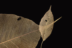 Wonderful vein pattern of leaves Royalty Free Stock Photos