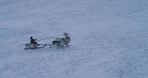 Wonderful video of a man on a sleigh have a ride with beautiful reindeers in the middle of Arctic. 4k stock video footage