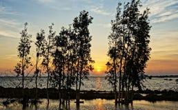 Wonderful Vietnam rural sunrise landscape Stock Image
