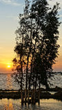 Wonderful Vietnam rural sunrise landscape Royalty Free Stock Photography