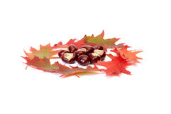 Wonderful view of autumn leaves and chestnuts. Stock Image