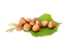 Wonderful view of autumnal hazelnuts with buds. stock image