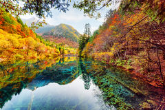 Wonderful view of the Five Flower Lake among colorful fall woods Stock Photos