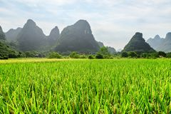 Wonderful view of green rice field and scenic karst mountains royalty free stock image