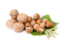 Wonderful view of hazelnuts and walnuts. Stock Photos