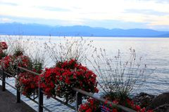 Wonderful view to the lake Leman. Switzerland, Roll, Leman lake. Beautiful seafront. The red flowers on the bridge Royalty Free Stock Images