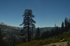 Wonderful Views Of A Forest From The Highest Part Of One Of The Mountains Of Yosemite National Park. Nature Travel Holidays. June 29, 2017. Yosemite National Royalty Free Stock Photography