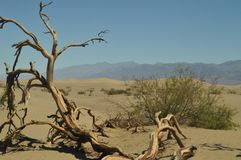 Wonderful Views Of The Mohave Desert Dry Trunk. The Lowest Place Below The Sea Level. Gigantic Salt Lagoons. Travel holydays Geolo. Gy. June 28, 2018. Death Stock Photo