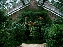 Wonderful Wall. Lush brick wall inside a greenhouse Stock Photography