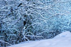 Wonderful white forest at winter. An wintertime scenic landscape royalty free stock images