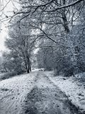 wonderful white landscape with snow royalty free stock images
