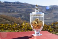Wonderful white truffle inside a transparent glass jar. On the bottom the fantastic hills with vineyards in the fall Stock Photography