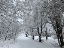 Winter forest after snowfall stock photography