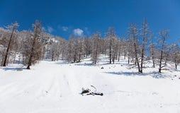 Wonderful winter landscape Stock Photos