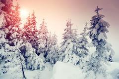 Wonderful winter landscape Royalty Free Stock Photography