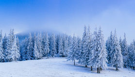 Wonderful winter landscape Stock Photography
