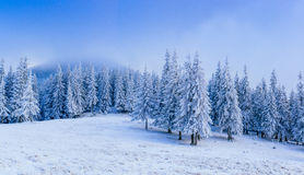 Wonderful winter landscape Stock Photos