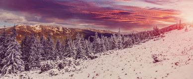 Wonderful winter landscape. Christmas scenery, snow covered frosty trees in a mountain. overcast clouds inthe sky, on the bascgrou. Nd. Winter background royalty free stock photos