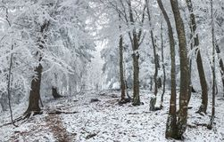 Wonderful winter landscape in snowy woods. Heavy frost on trees Stock Photography