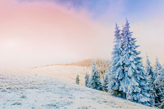 Wonderful winter landscape Royalty Free Stock Image