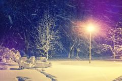 Wonderful winter landscape. Winter scenery, snow covered frosty frosty trees in a night city park. Wonderful winter landscape. Winter scenery, snow covered Stock Image