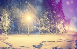 Wonderful winter landscape. Winter scenery, snow covered frosty trees in a night city park. Wonderful winter landscape. Winter scenery, snow covered  frosty Royalty Free Stock Image