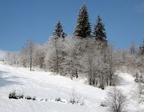 Wonderful winter landscape. Winter wonder. Snow hillside with three pines in the foreground in а bright sunny day. Carpathian mountains (Karpaty) in Ukraine Stock Photo