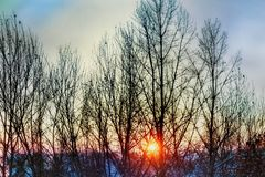A wonderful winter morning in the mountains. With red sun behind the bare trees Royalty Free Stock Image