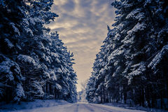 Wonderful Winter road and the forest Royalty Free Stock Photos
