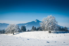 Wonderful winters day with snowy trees Stock Photo