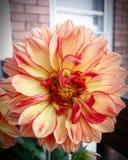 Wonderful. Wonderful, flower, naturw, nature, leaf, beauty stock photos