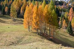Colorful autumn in the high mountains royalty free stock photo