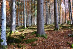 The colors of autumn forests. The wonderful world of autumn forests stock images