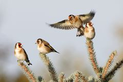The wonderful world of birds. And their magic, the masters of heaven royalty free stock image