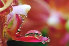 Wonderful world of close-ups Royalty Free Stock Image
