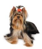 Wonderful dog Stock Photo