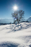 Wonderfull tree in austrian alps with sun beams Royalty Free Stock Images